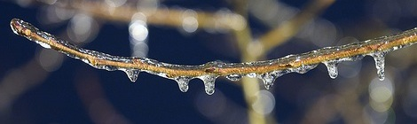 Photo by Mike Lutz, used under Creative Commons license